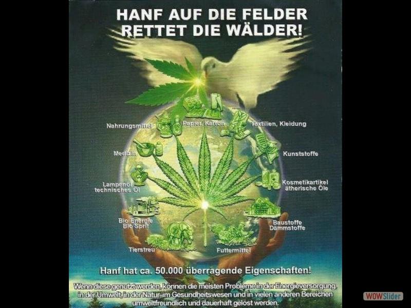 Hanf-auf-die-Felder