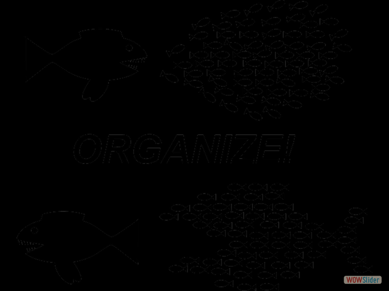 11 - Organize2
